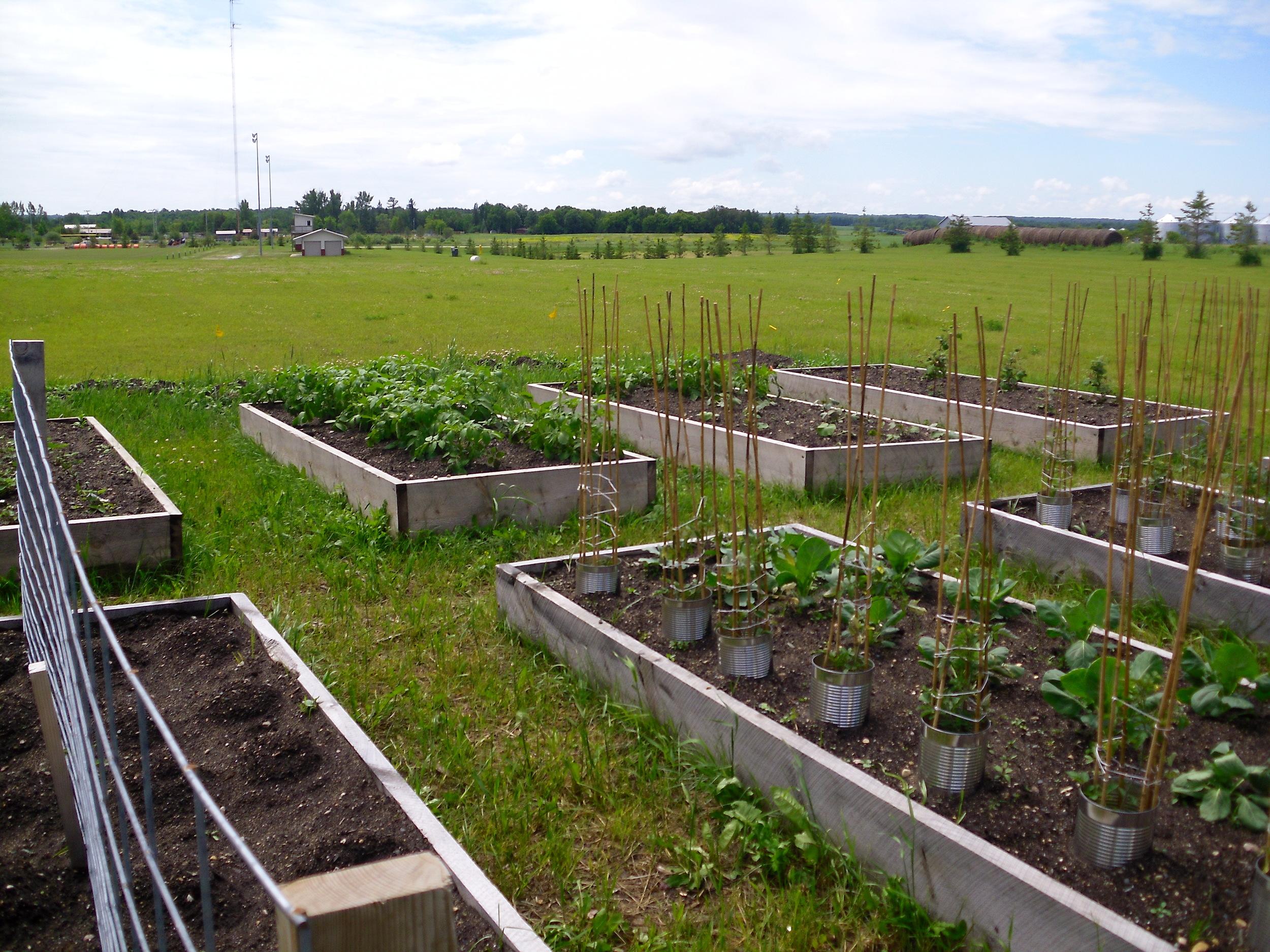 school garden 2011 011.jpg