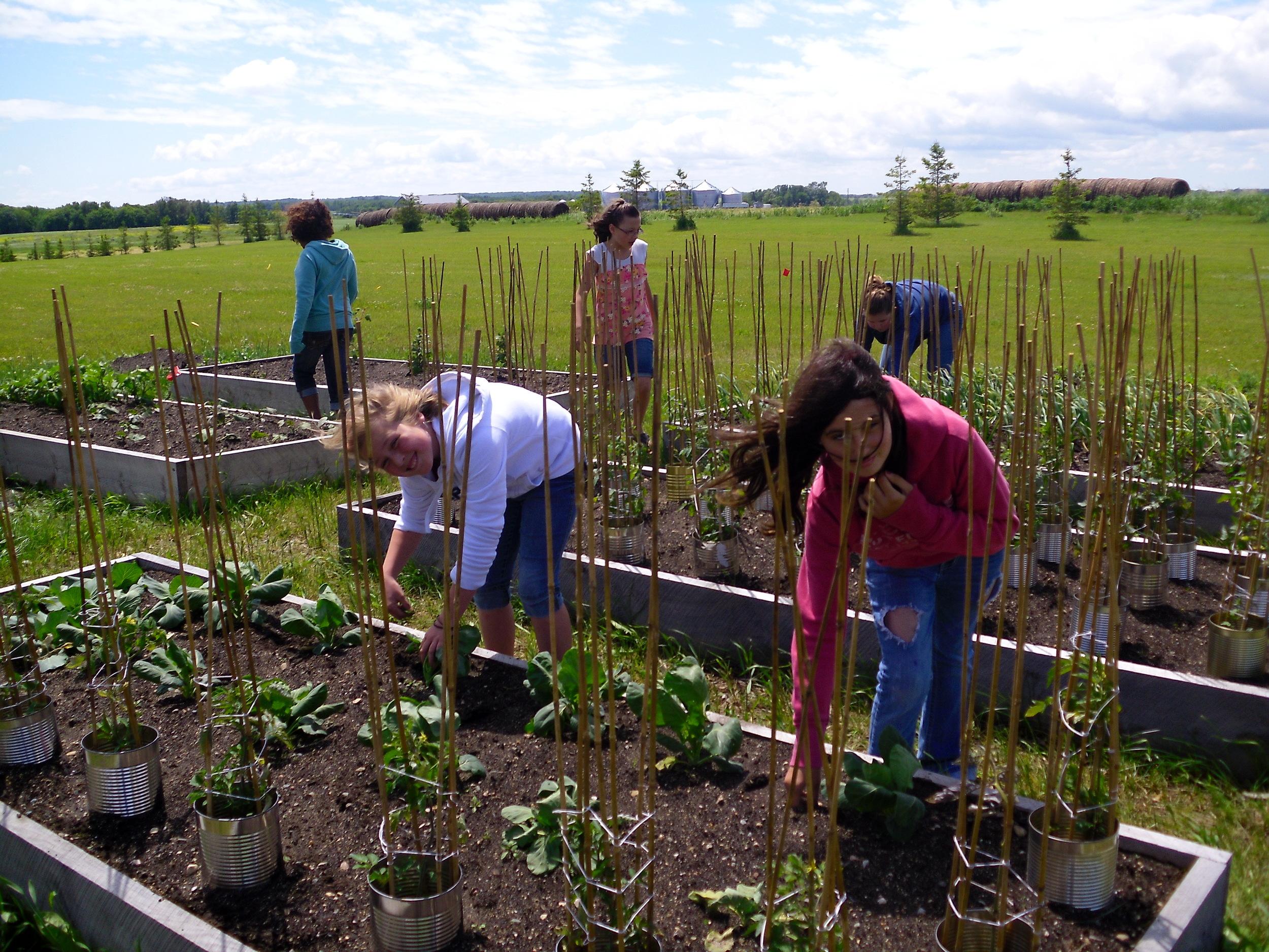 school garden 2011 014.jpg
