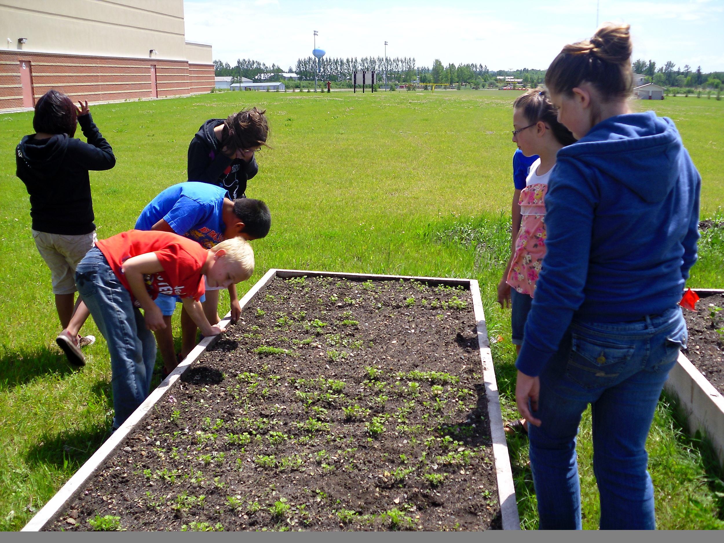 school garden 2011 018.jpg