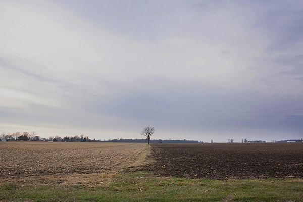 "Tree Between Fields, Rural Indiana 2015 Inkjet Print 12"" x 18"""