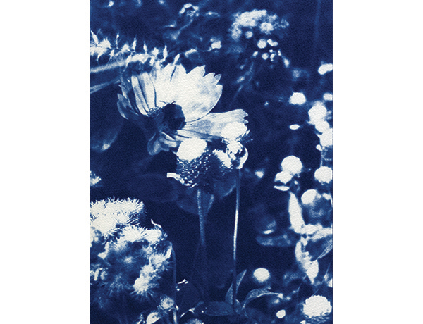 """Blue Garden 2007 Cyanotype on Watercolor Paper 8"""" x 10"""" Licensed to Urban Outfitters in 2015"""