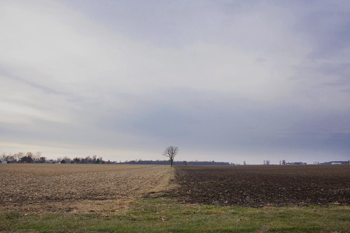 "Tree Between Fields, Rural Indiana  2015. Dye-based inkjet print on resin-coated paper. - 12"" x 18"""