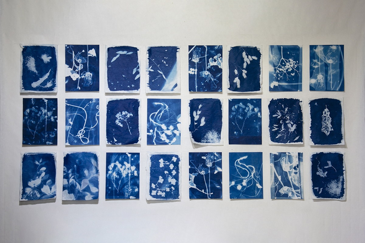 "Untitled  2018. Collaboration with Professor Betsy Morris. Cyanotype on Chinese rice paper. - 46"" x 24"""