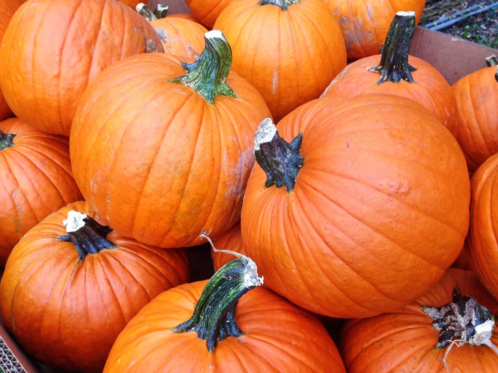 pumpkins10214.jpg