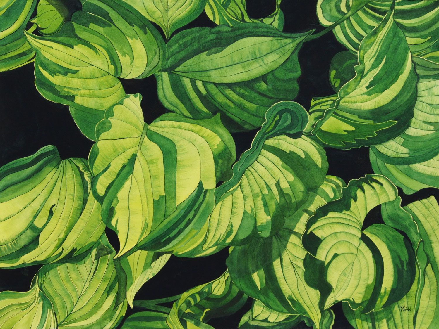 Quilted Hosta