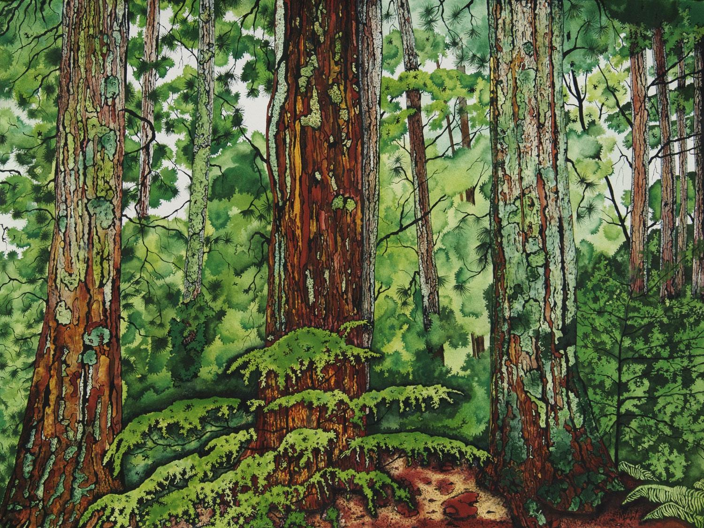Redwood Pines - Sold