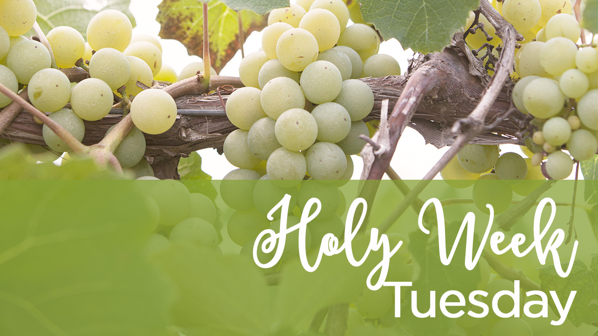 Holy Week Tuesday.jpg