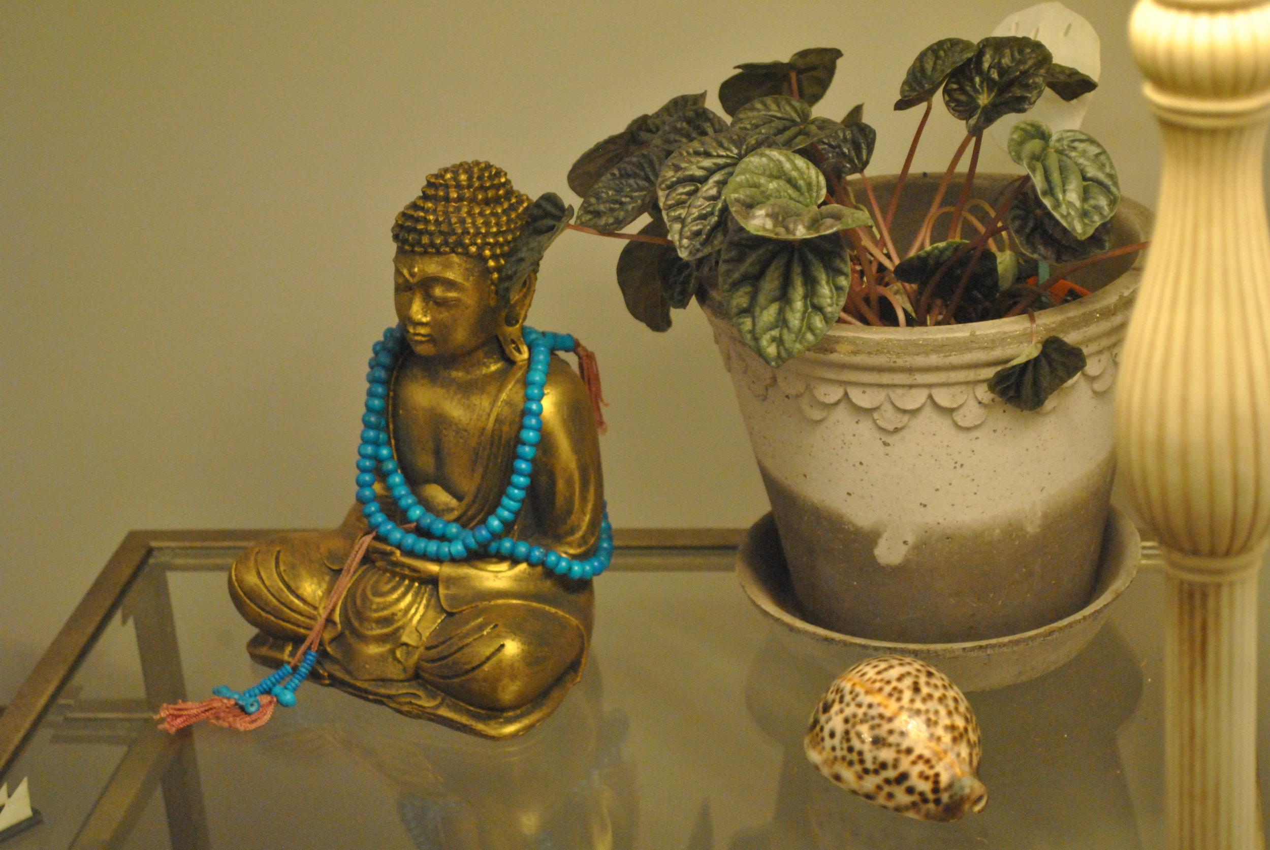 buddhaplant.jpg