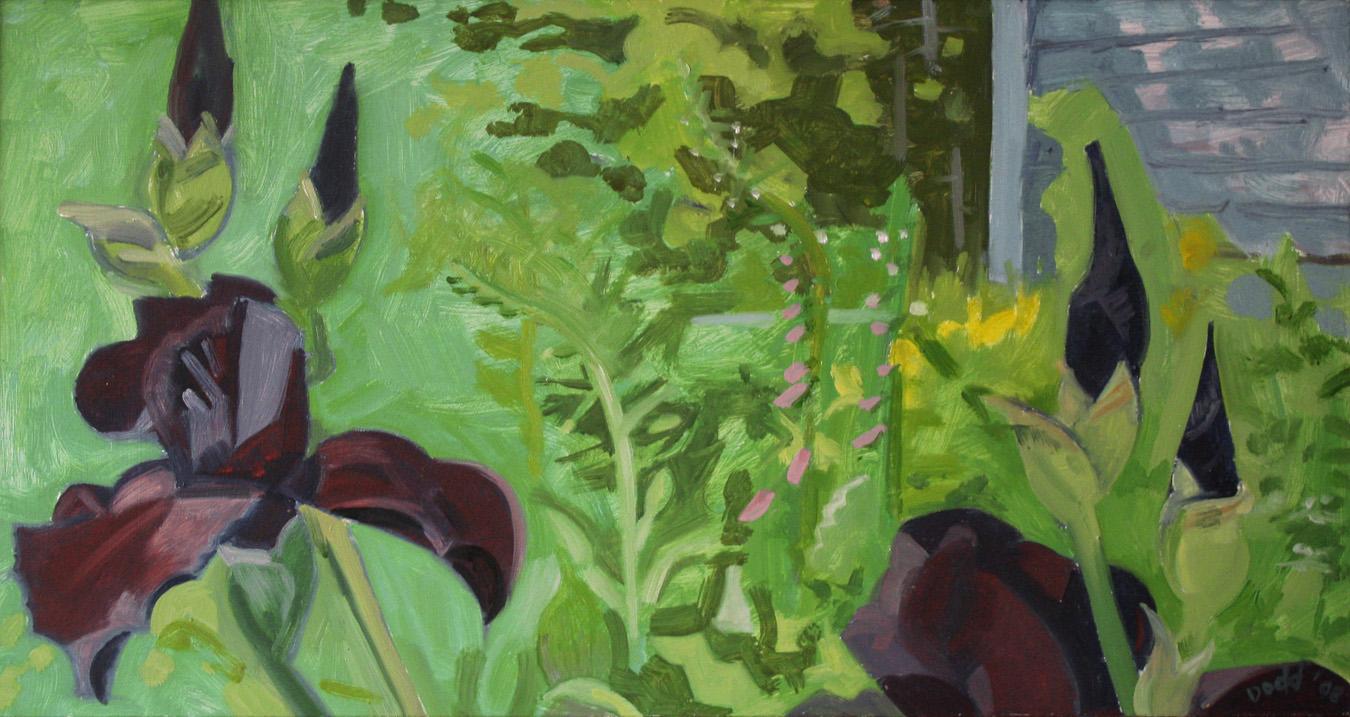 Black Iris in June