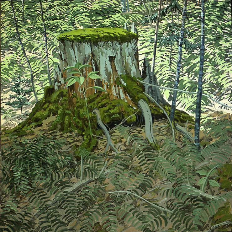 Stump and Ferns