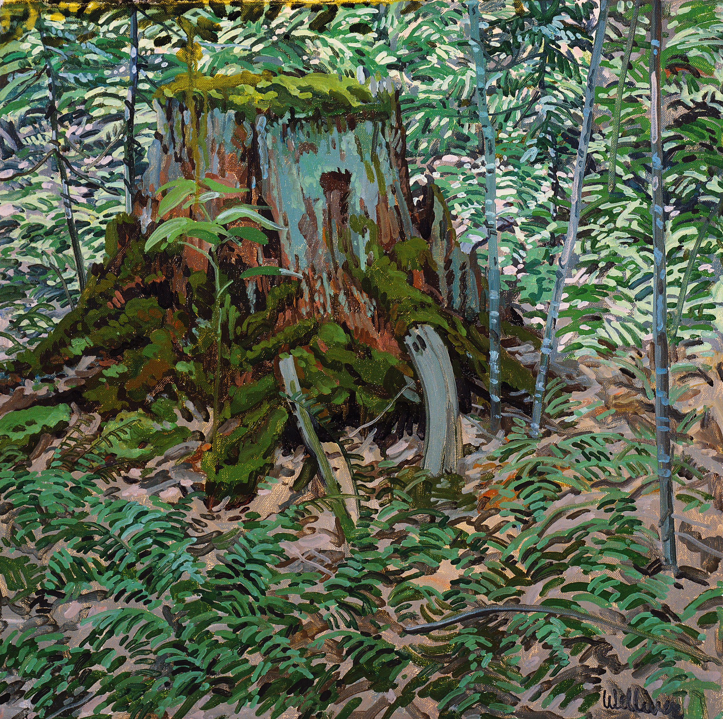 Study for Stump and Ferns