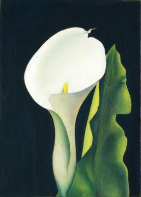 Flower Piece (Calla Lily)