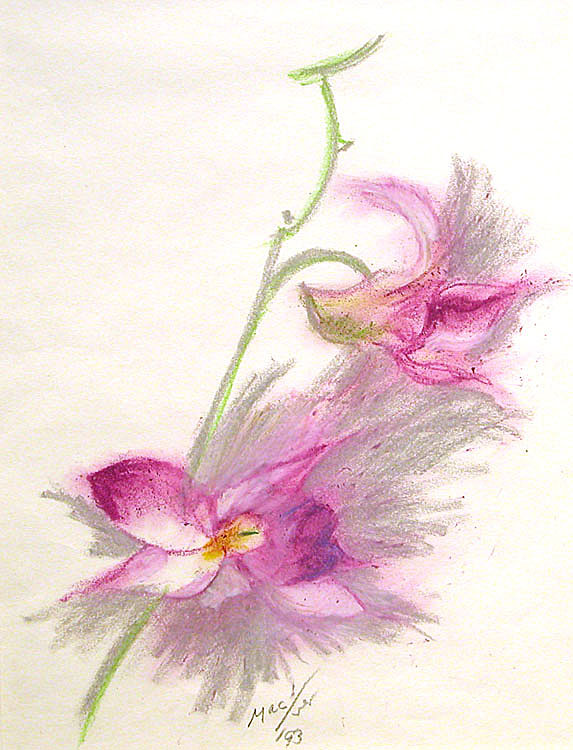 LM544_Orchid.jpg
