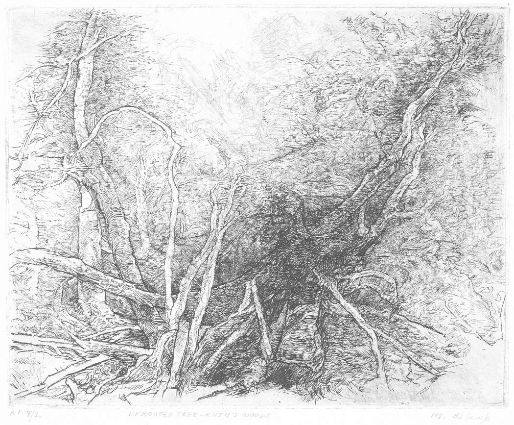 Uprooted Tree- Ruth's Woods