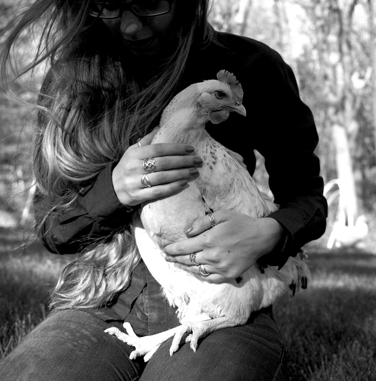 chickens033.jpg