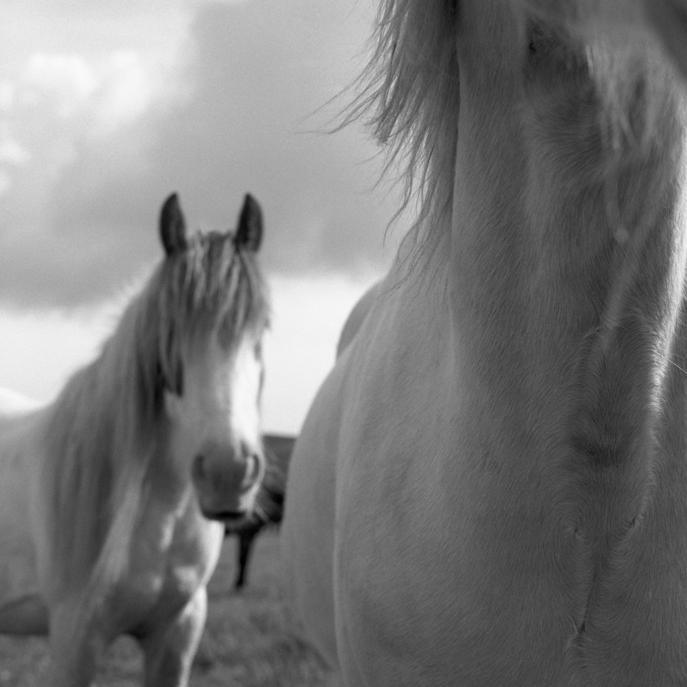 horseallihies.jpg
