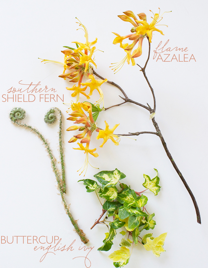 Anatomy of Flora: Spring II | Guest Edited by Tami Ramsay | CLOTH & KIND
