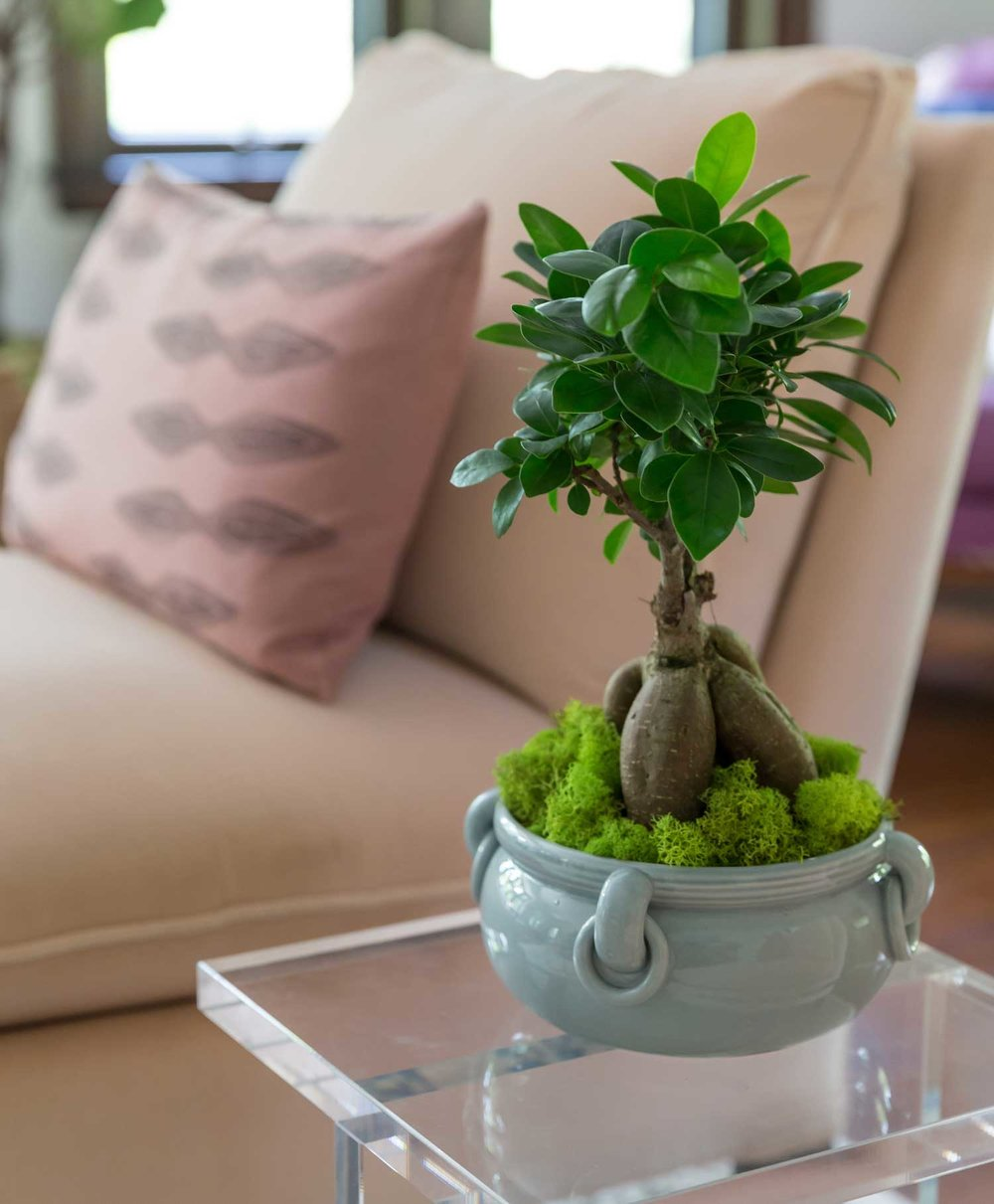 CLOTH & KIND :: Ann Arbor Hills Tudor, Living Room Plant Detail.jpg