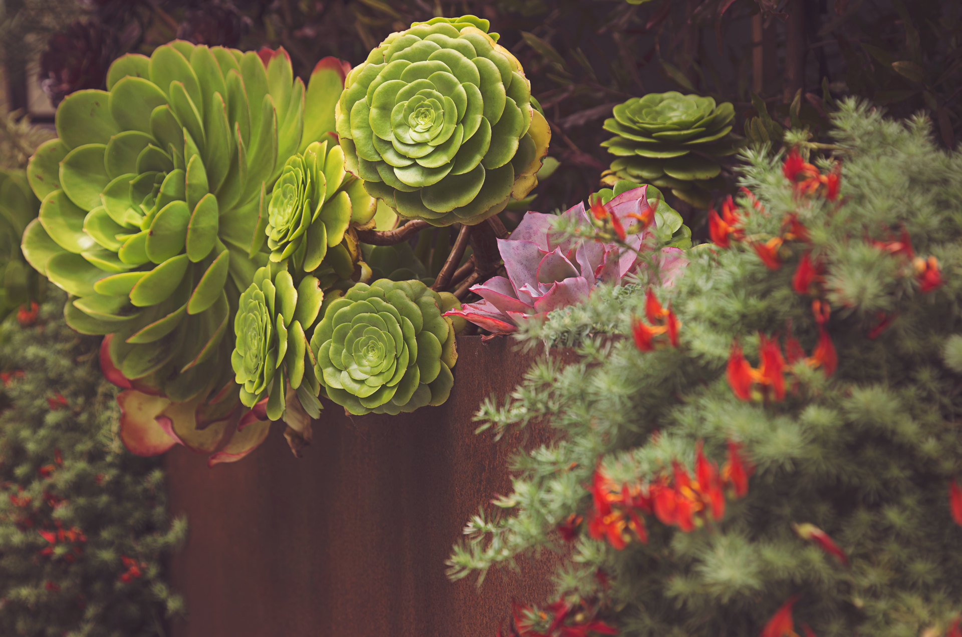 flowers-and-succulents-san-francisco-patrick-sanders.jpg