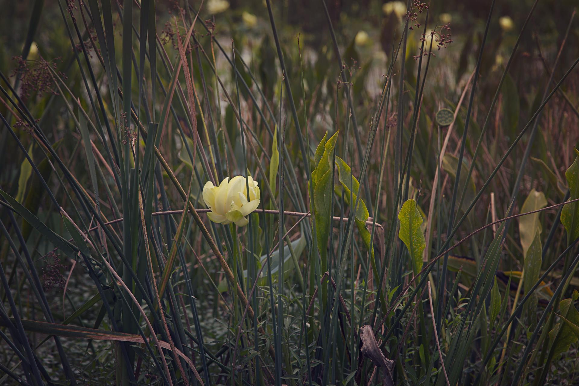 sweetwater-branch-sheet-flow-gainesville-paynes-prairie-patrick-sanders-12.jpg