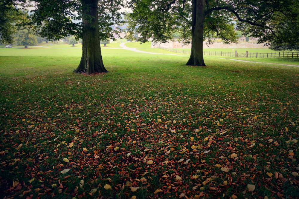 leaves-on-the-ground-chatsworth-patrick-sanders