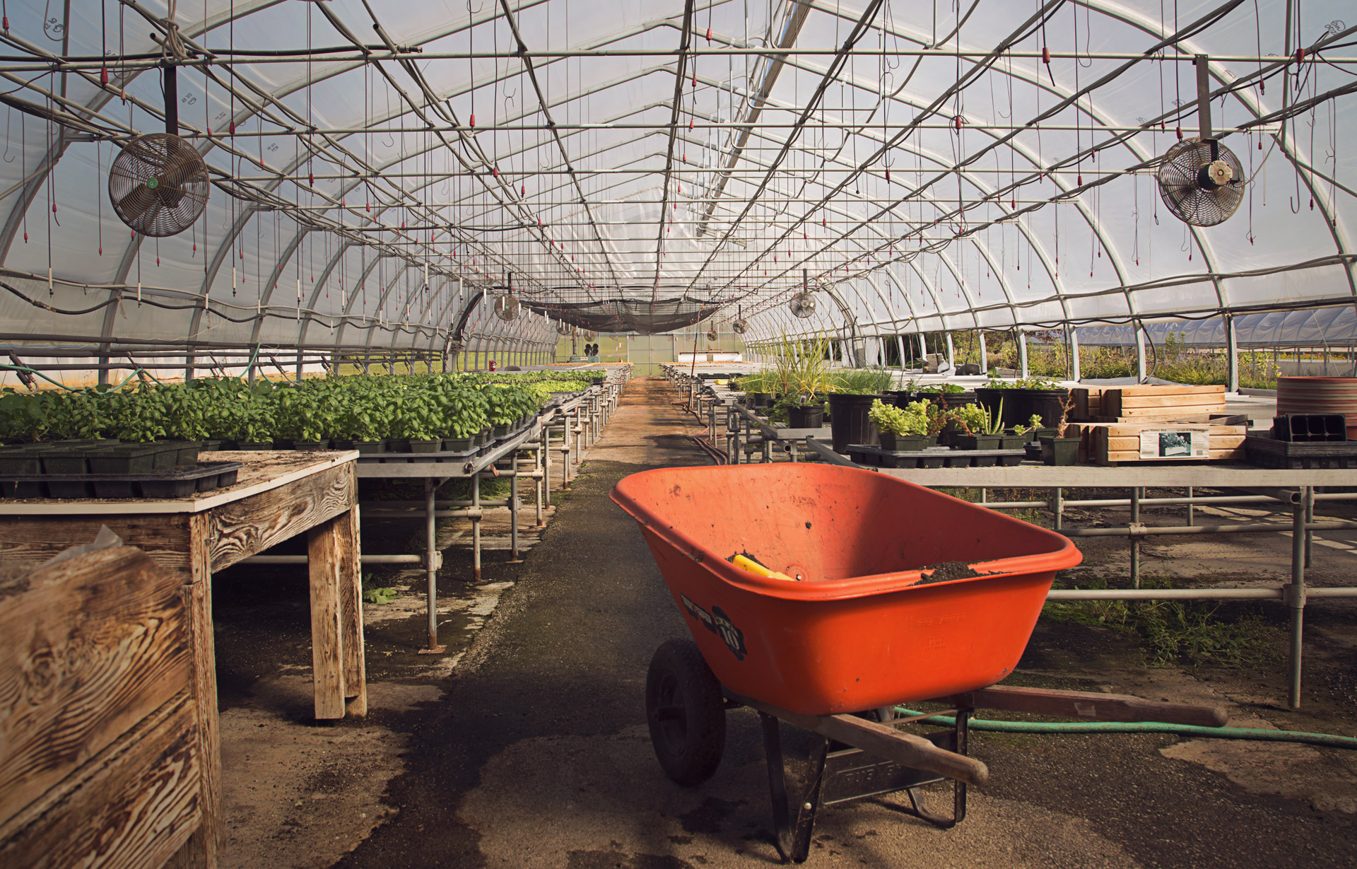 orange-wheelbarrow-in-a-greenhouse-mackay-gardens-unity-parisleaf.jpg