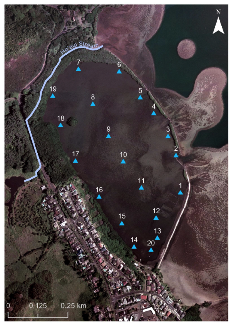 Fig. 4.  He'eia Fishpond pond-interior sampling grid, PVC stake locations and numbers [7].