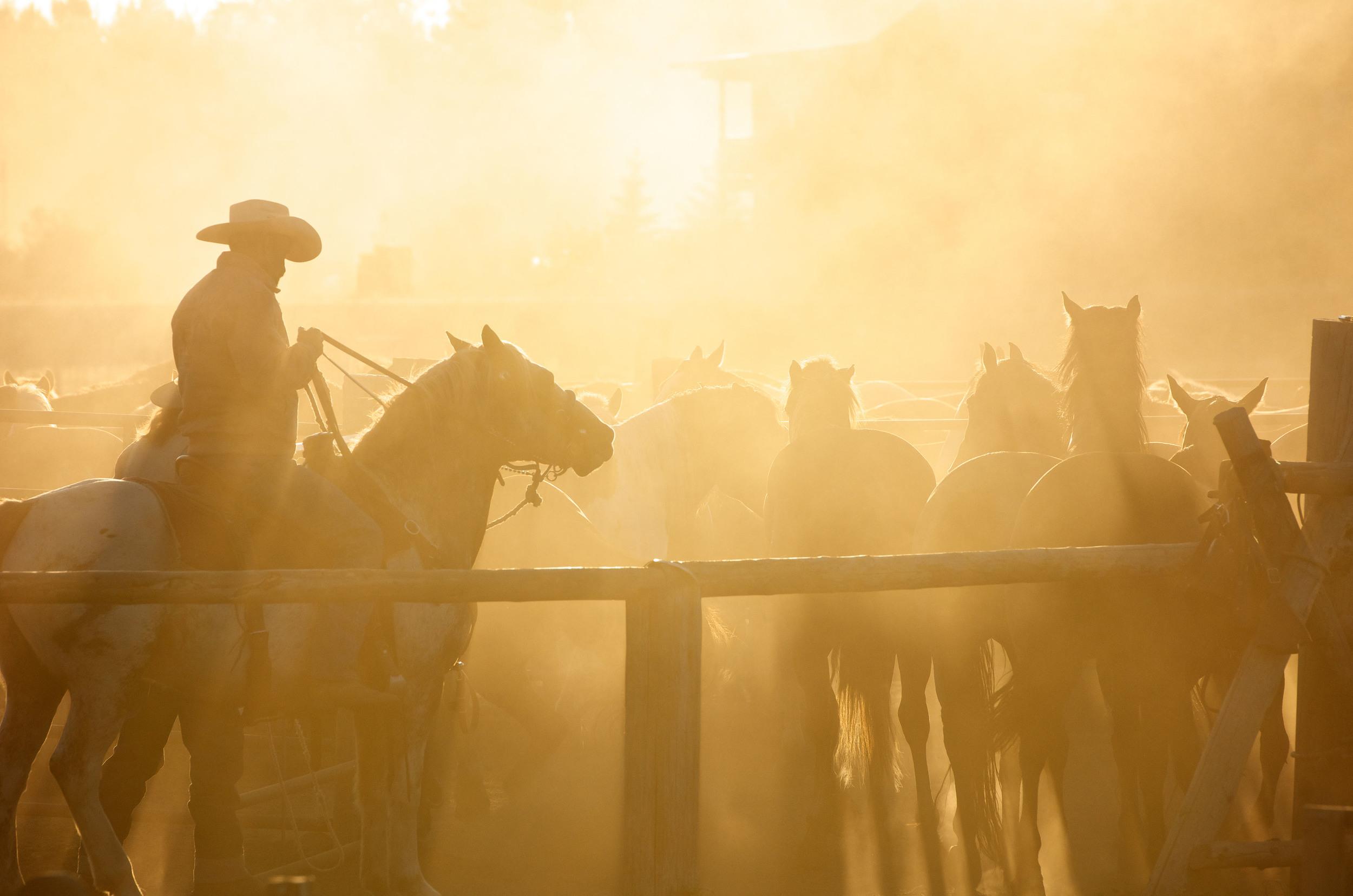 Jackson Hole Yellow Sunrise Cowboys.jpg