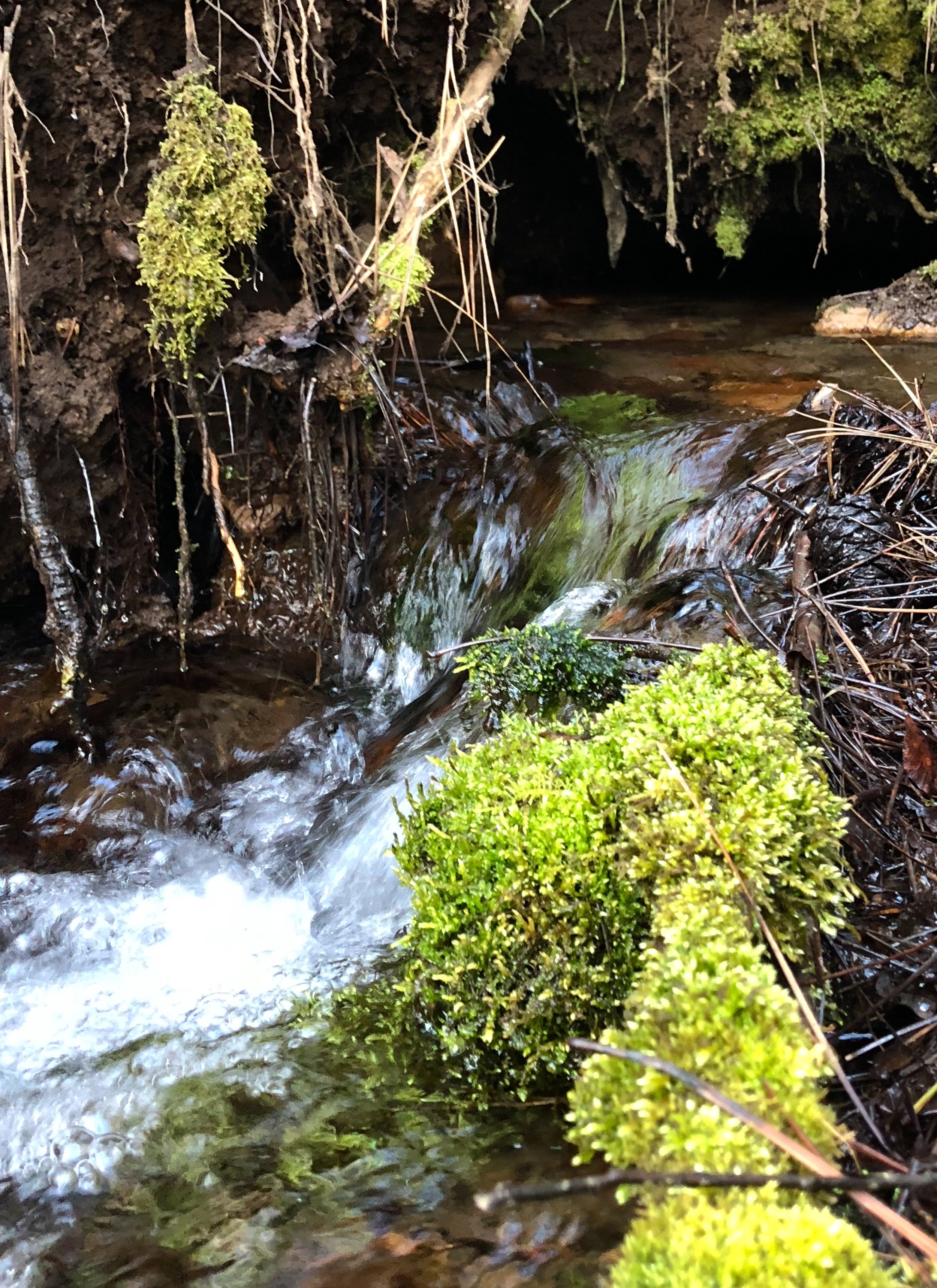 Relax to the sound of bubbling springs - Why does the sound of flowing bubbling water have such a powerful effect of relaxation? Brain scans show that the sounds of nature—wind in the trees, water bubbling up from underground springs—can change our brains and bodies in ways that help us relax.