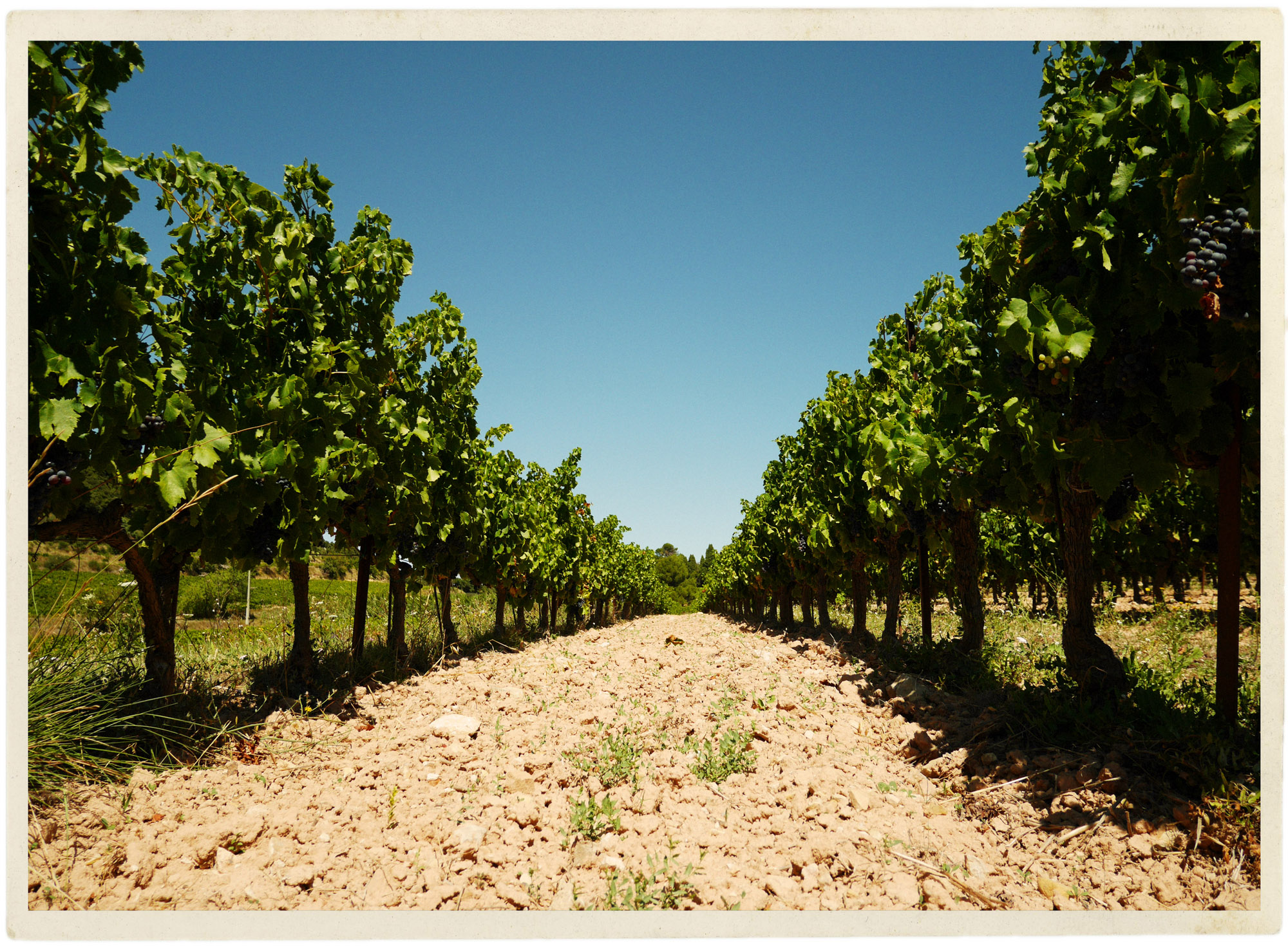 Perfect summery blue sky in the vines.
