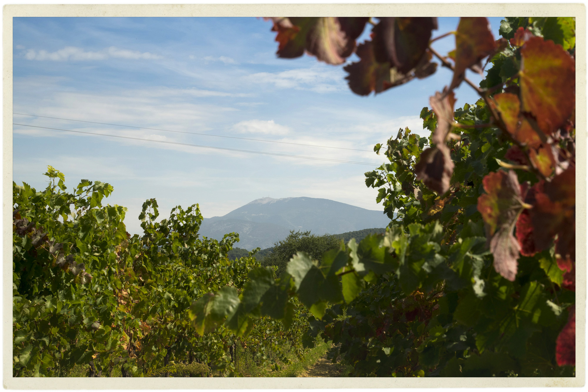 Ventoux in the distance from a vineyard in Roaix.