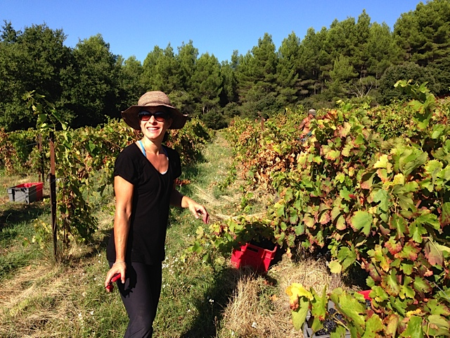 Helping out with harvest in Le Barroux on a 26 degree day in October. Provence...