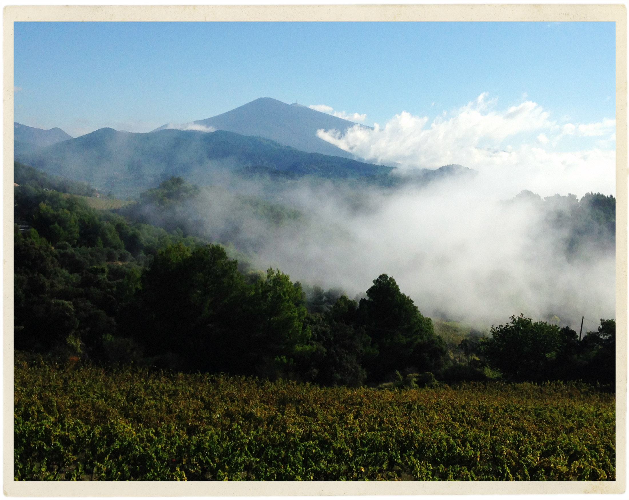 October morning mists on the Ventoux from the vineyards of Le Barroux.