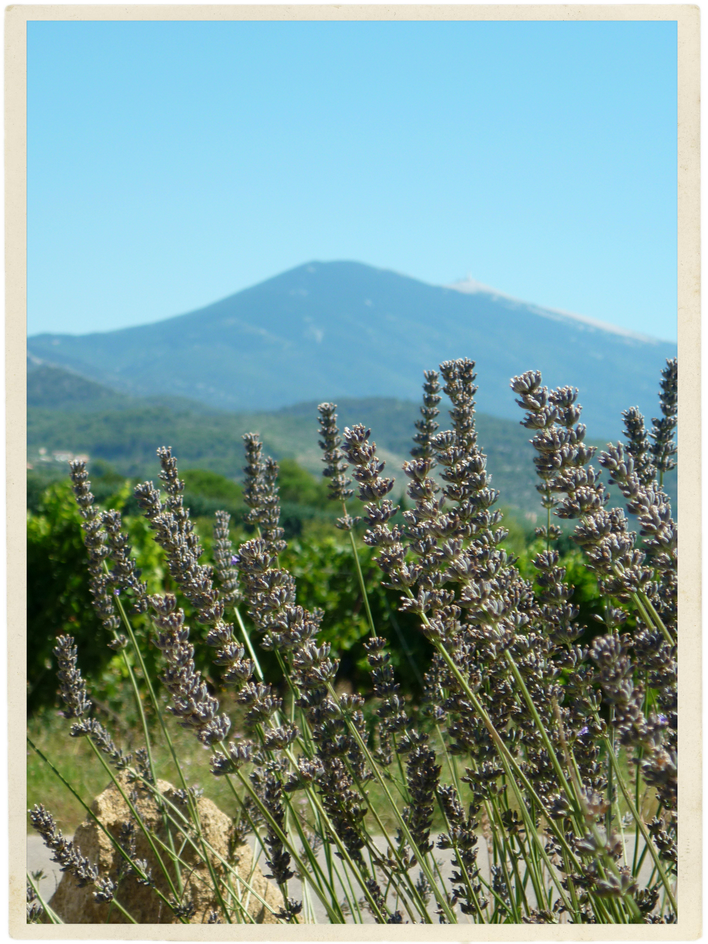 Lavender and the Ventoux. Two of the most beautiful things.