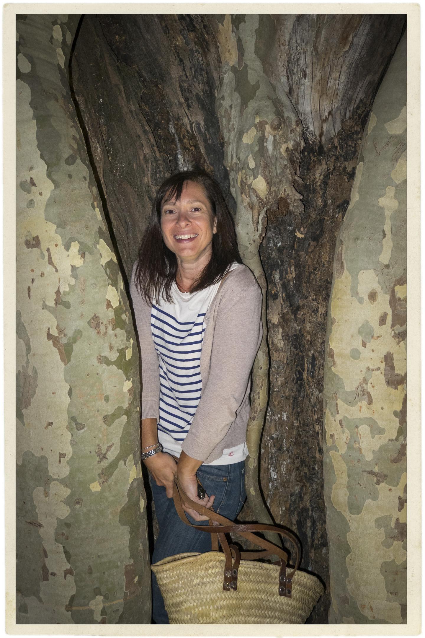 Inside a Platane tree!