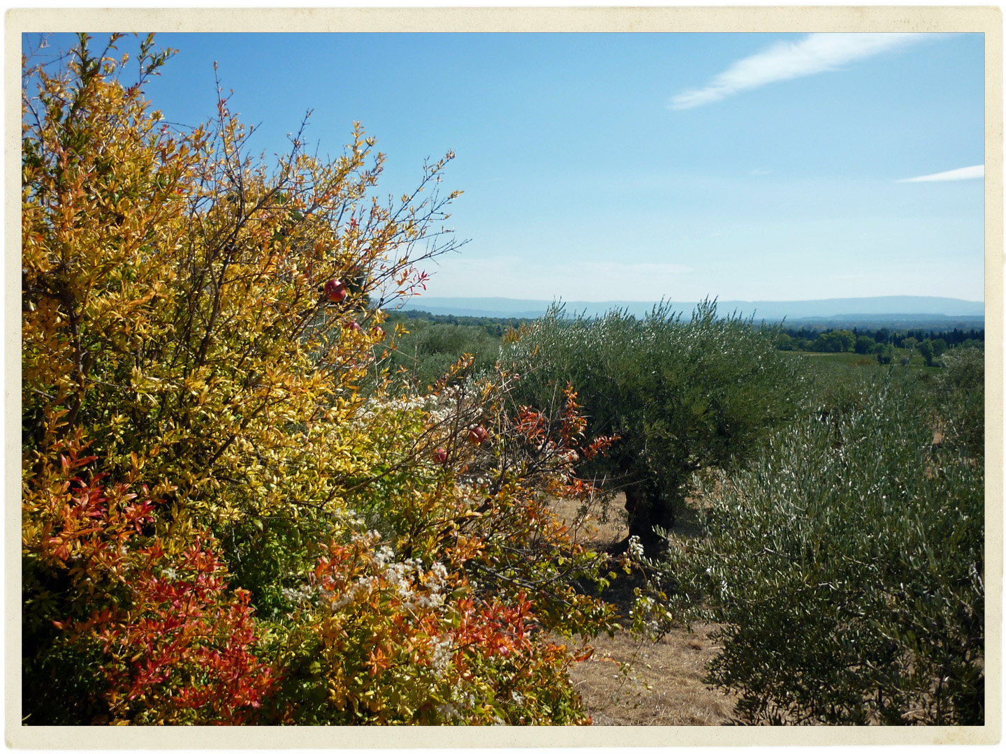 Olives and pomegranates. What's not to love about this place?