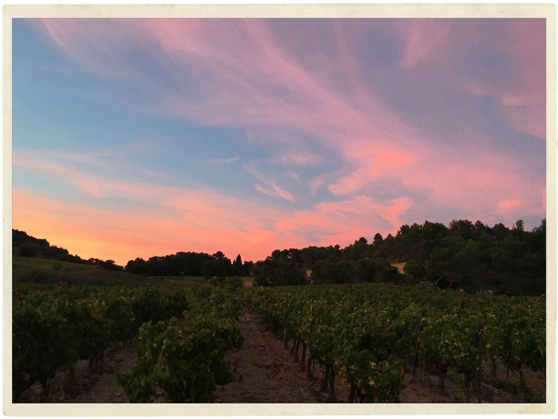 Sun setting over the vines at Le Clos de Caveau.