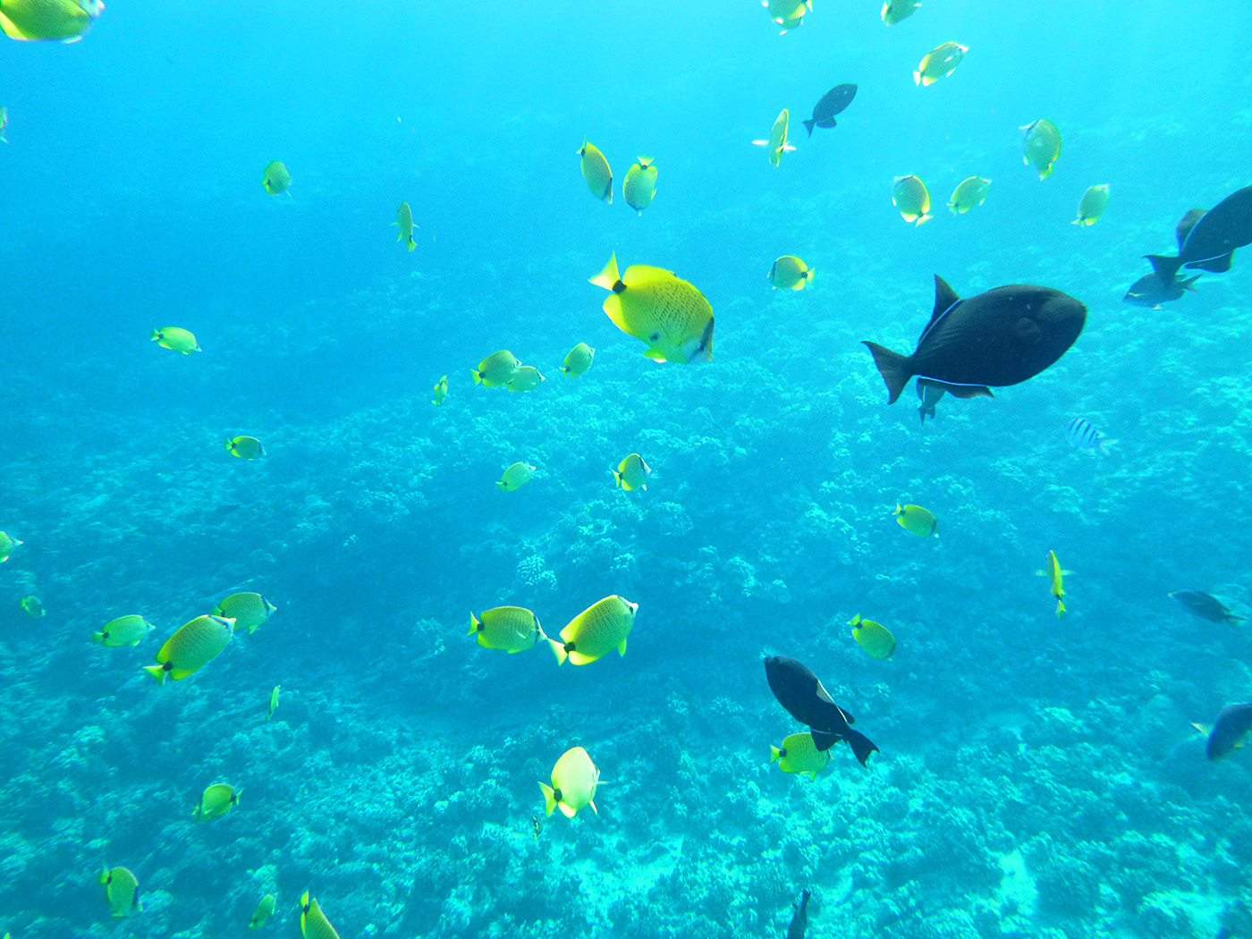 Fishes off the front side of Molokini Crater.