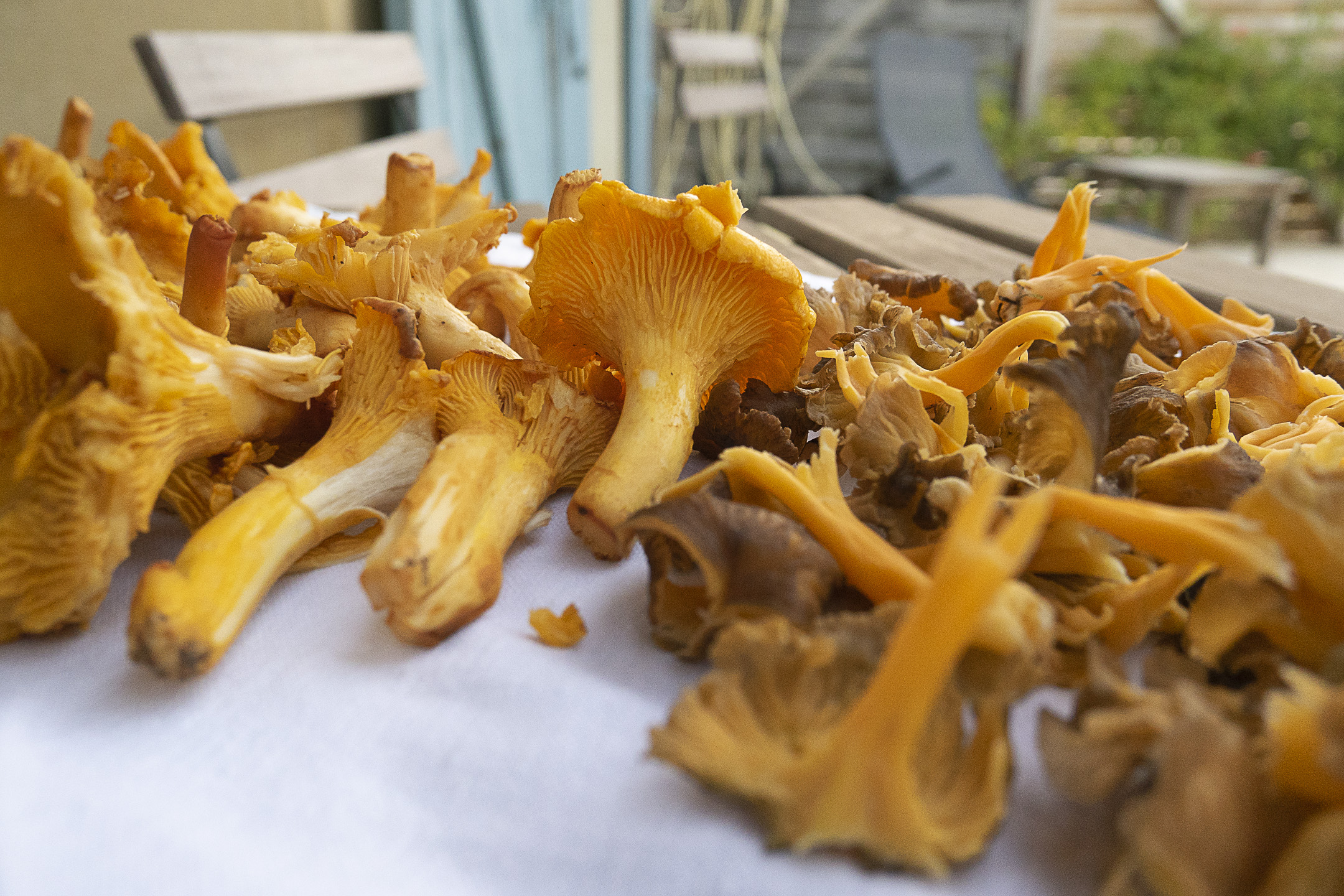Chanterelles are easy to indulge in here.