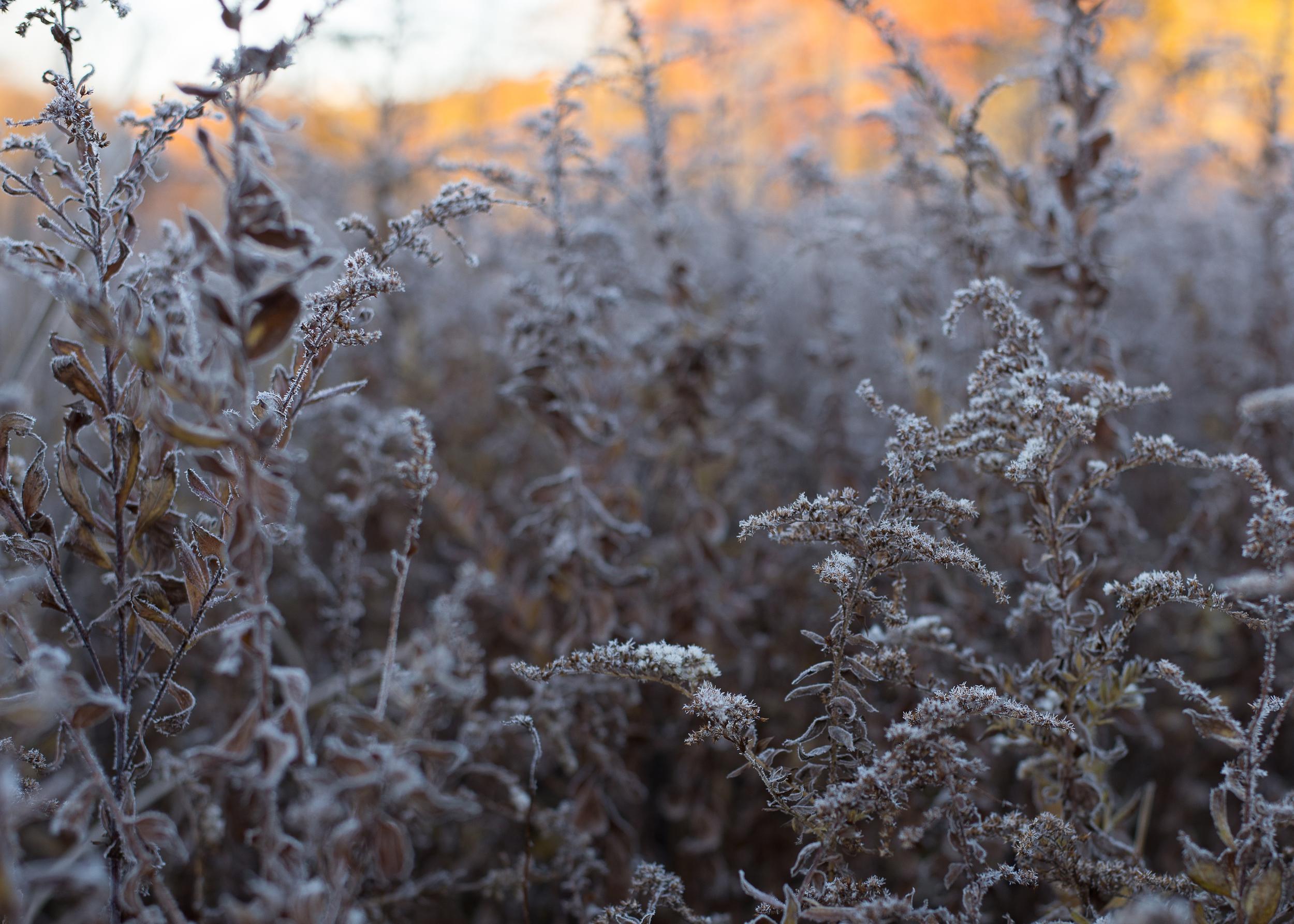 WinterHillStudio Frosty Brush at the Meadow.jpg