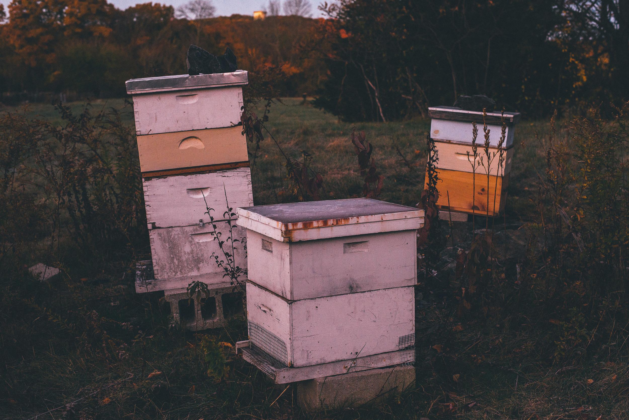 WinterHillStudio Beehives in Fall