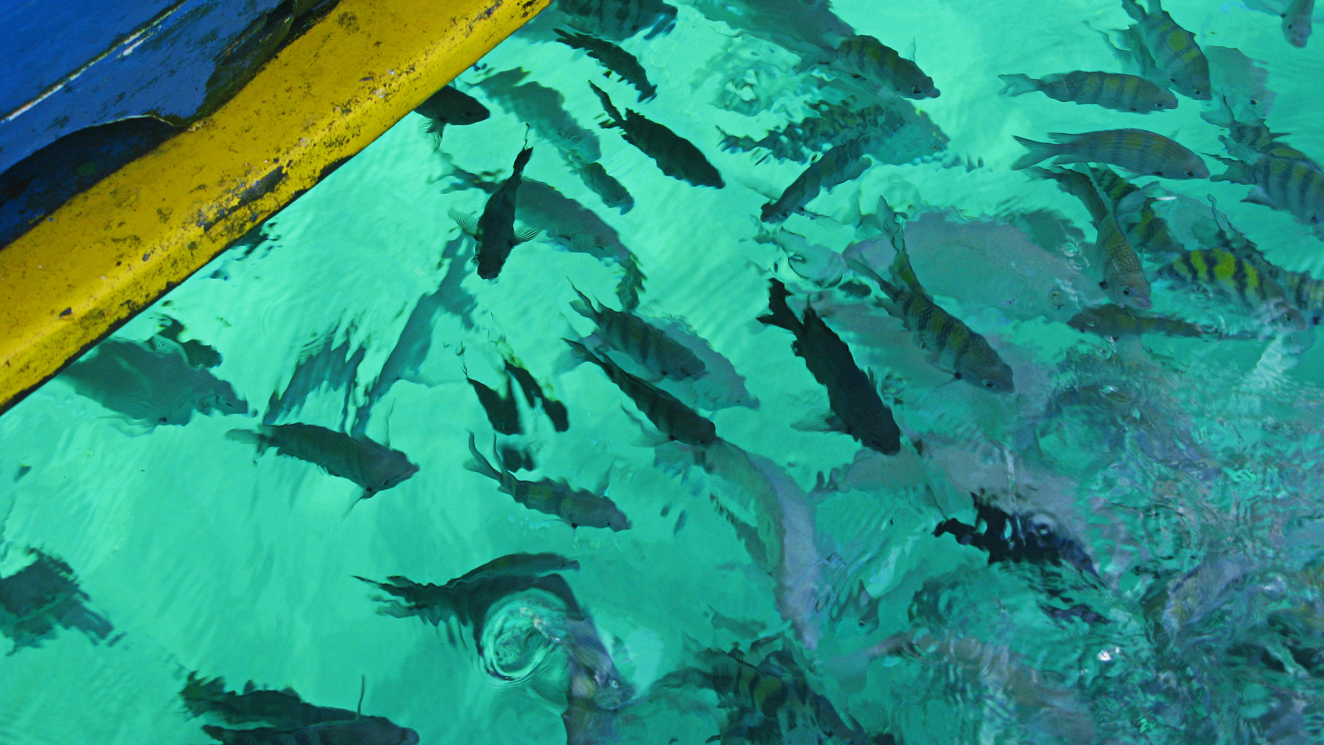 Peixes no pier