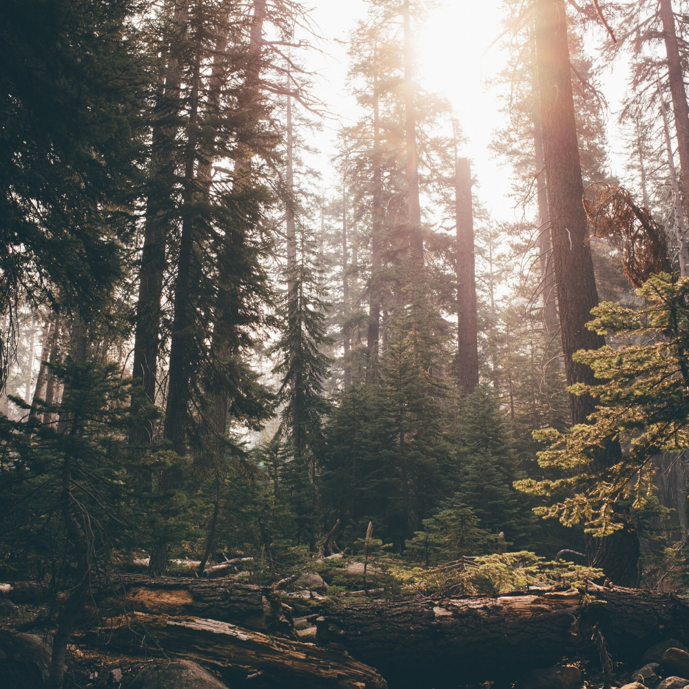 Sequioa National Forest by Debra Alison Photography
