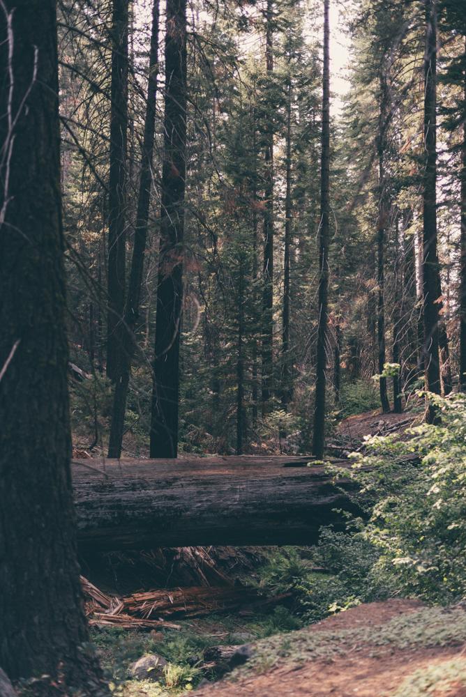 Debra Alison Yosemite Adventurous Elopement-558.jpg