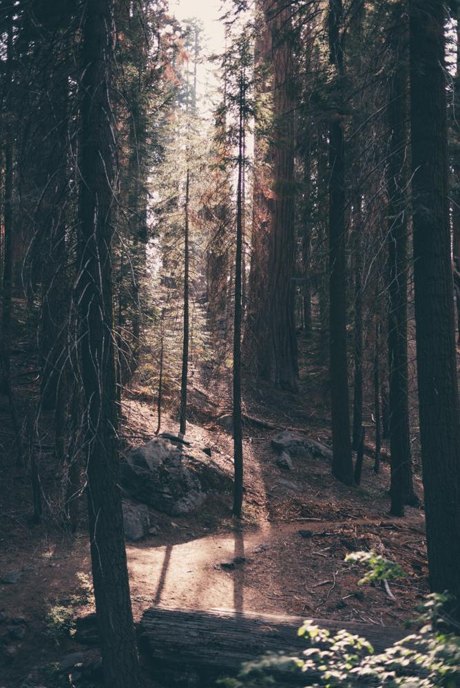 Debra Alison Yosemite Adventurous Elopement-560.jpg