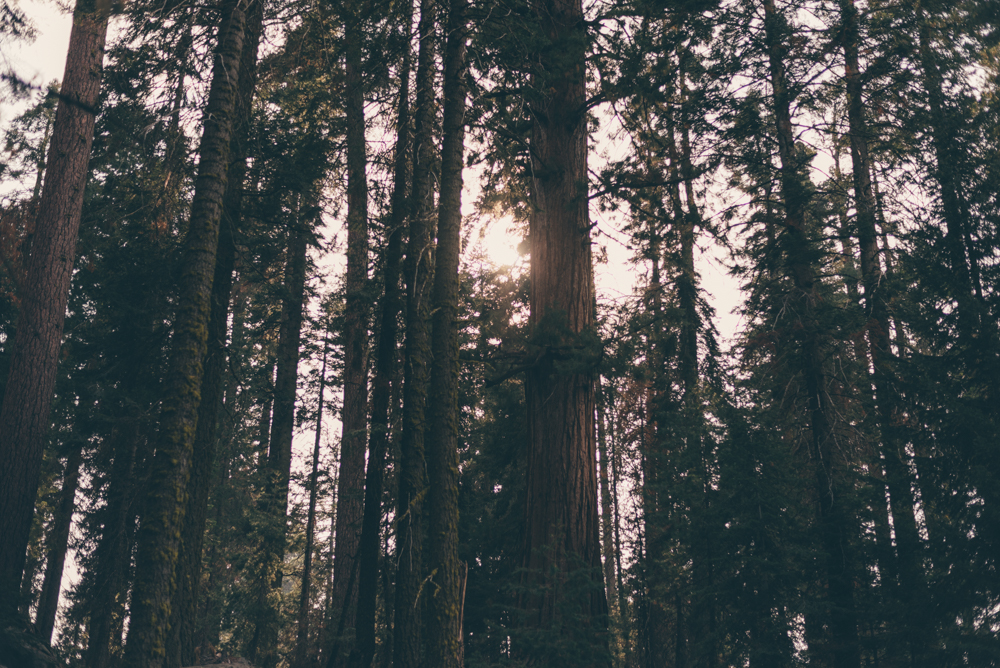 Debra Alison Yosemite Adventurous Elopement-552.jpg