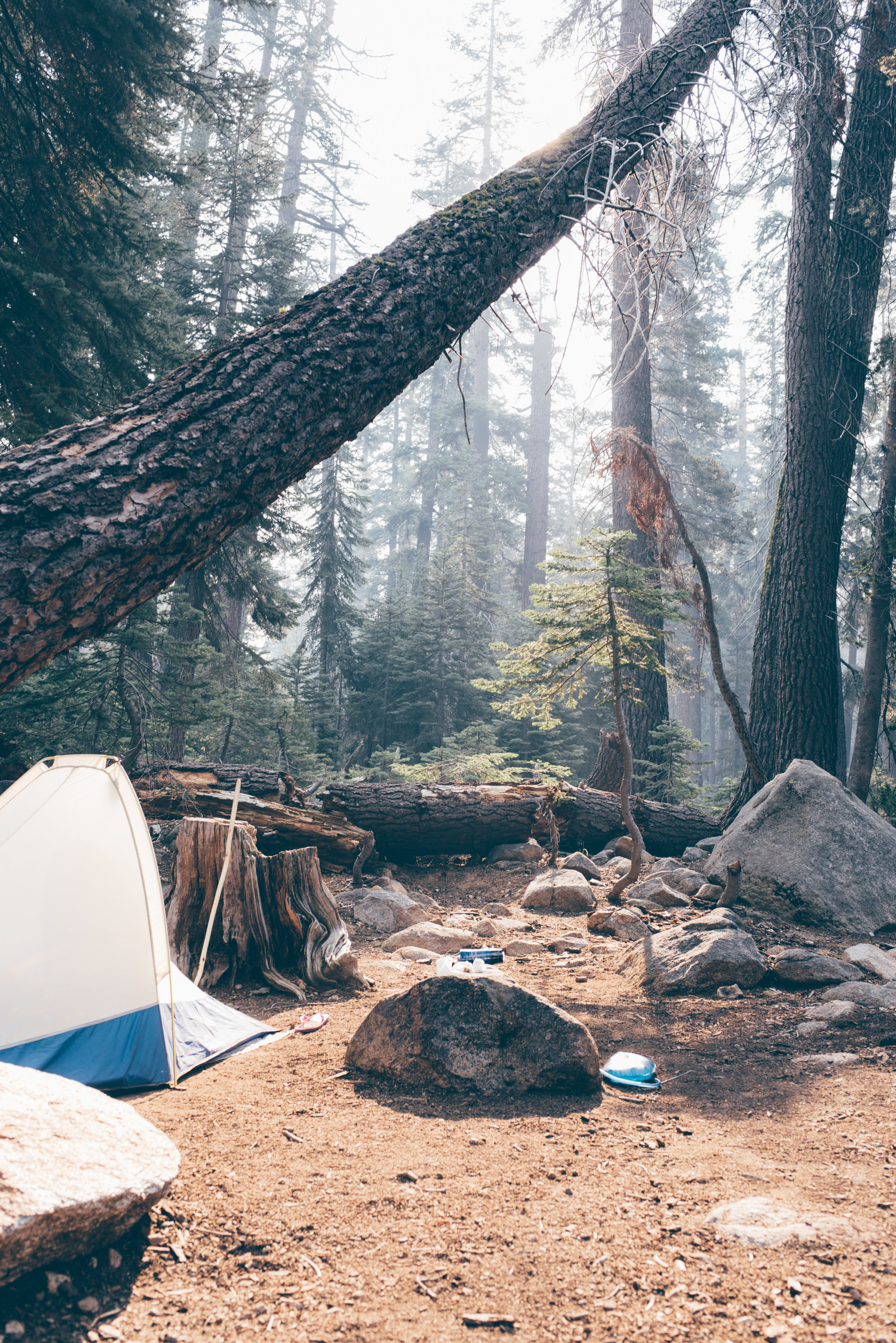 Debra Alison Photography Sequoia National Park Camping