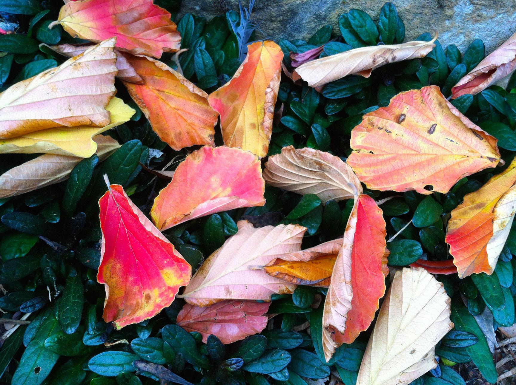 leaves-ajuga.jpg
