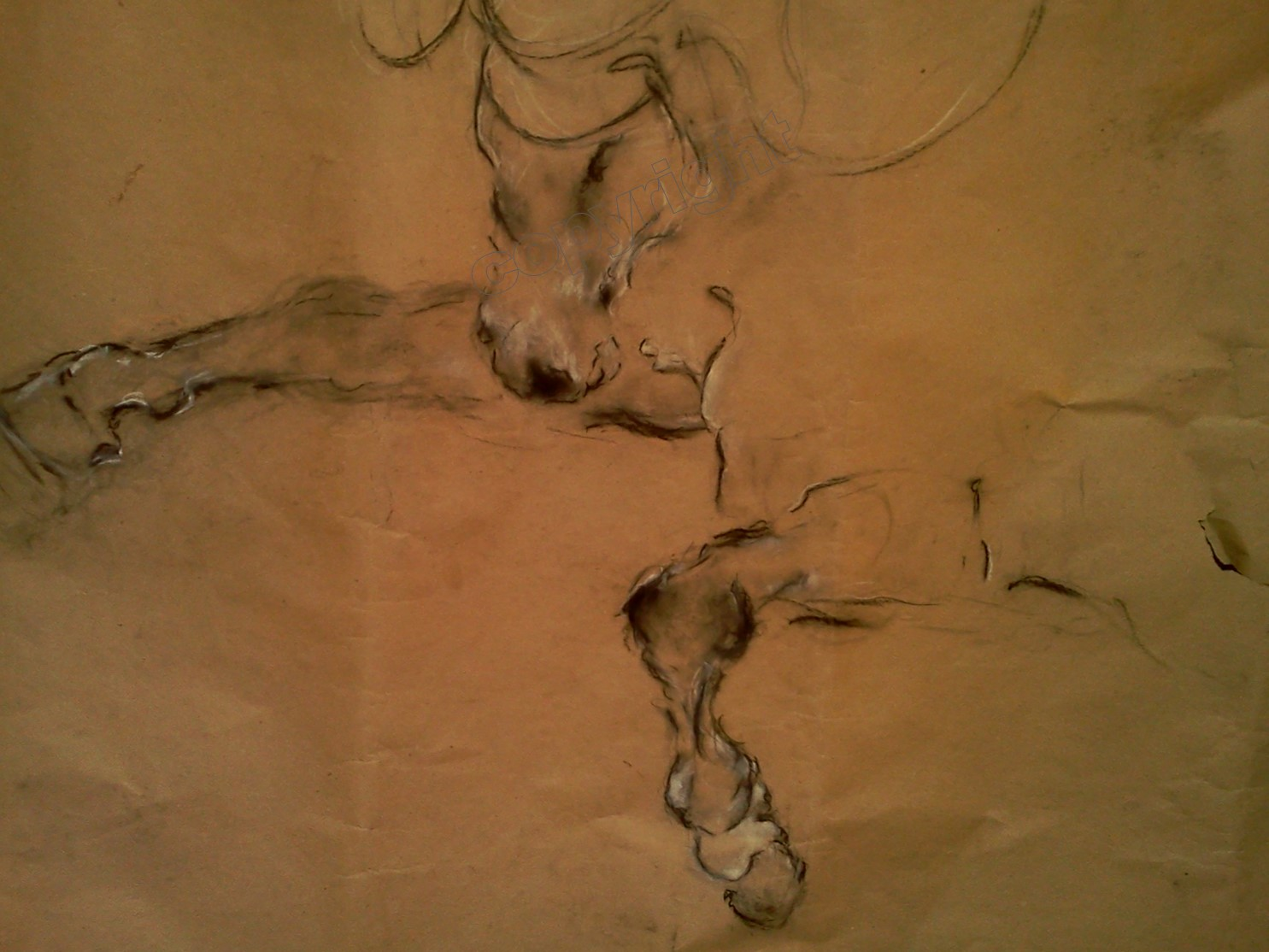 Horse Study #16
