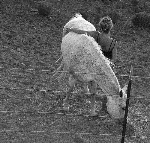 ash_horse_bw.jpg